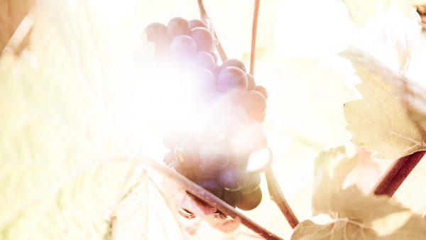 photo wine rabes for landingpage websop wine