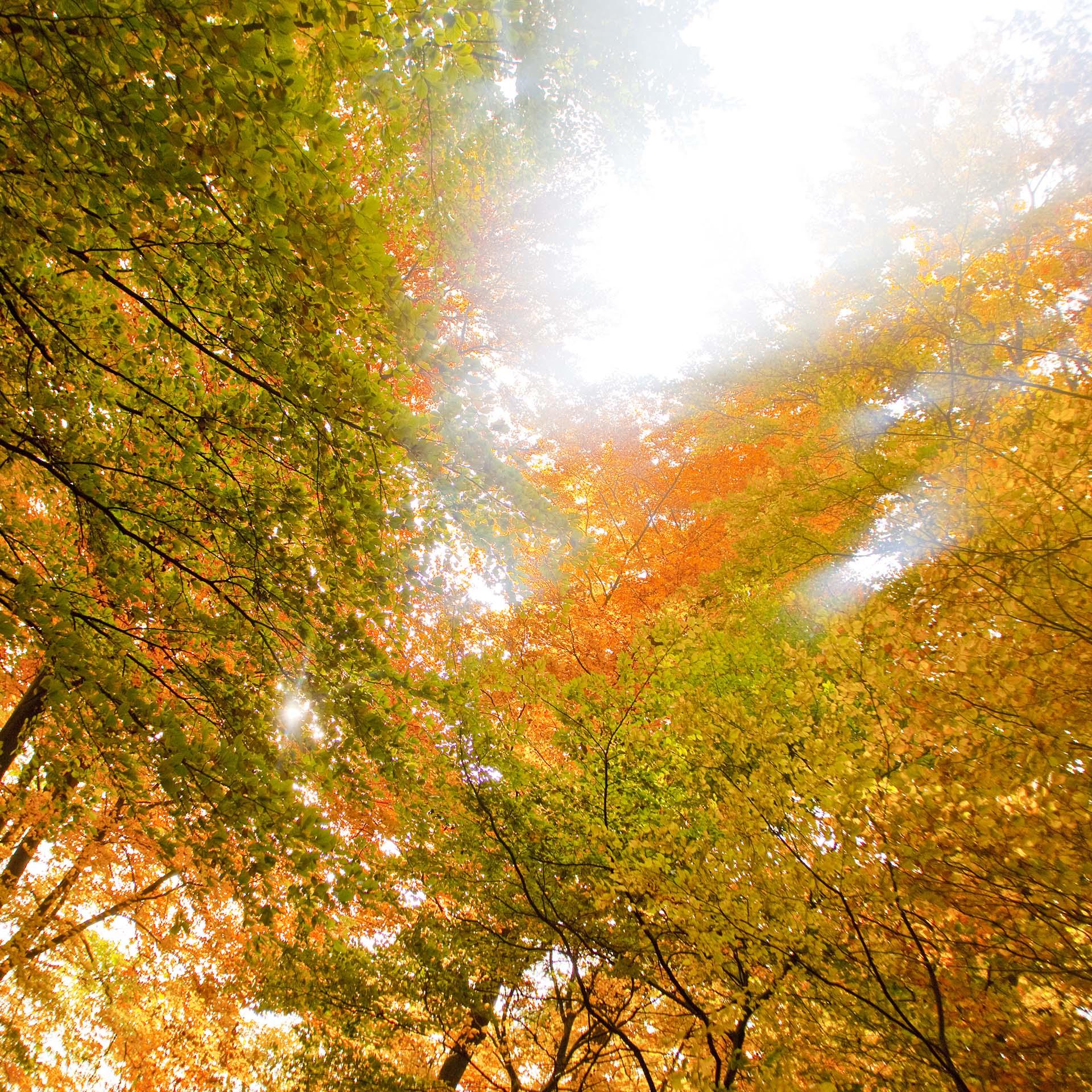 Herbstfarben i echt eppelt fotografie for Christian herbst